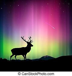 primo piano, cervo, luci nordiche