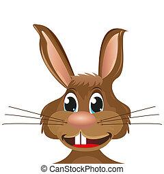 primo piano, coniglio