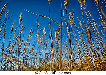 primo piano, di, asciutto, erba, da, il, ground.