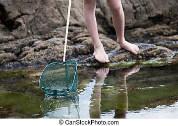 primo piano, di, bambino, pesca, in, rockpool, con, rete