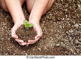primo piano, di, bambino, presa a terra, sporcizia, con, pianta