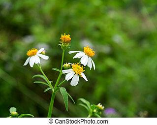 primo piano, di, fiori, erba, in, il, garden.