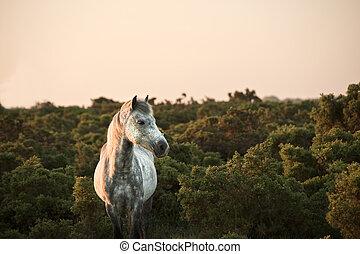 primo piano, di, foresta nuova, pony, bagnato, in, riscaldare, ardendo, alba, luce sole, in, paesaggio
