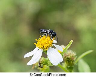 primo piano, di, insetto, su, fiori, erba, in, il, garden.