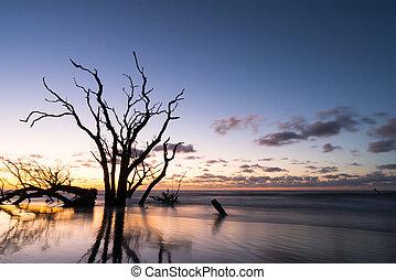 primo piano, driftwood, sopra, oceano, spiaggia, alba