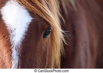 primo piano, equino, bellezza