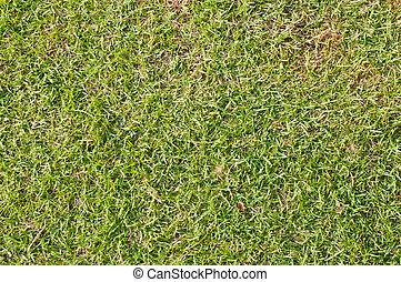 primo piano, erba, verde, immagine, fondo