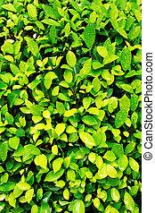 primo piano, foglia, primavera, immagine, verde, fresco