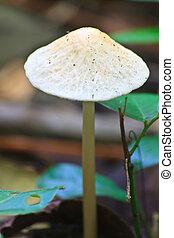 primo piano, fungo, in, profondo, foresta