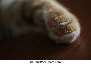 primo piano, gatto