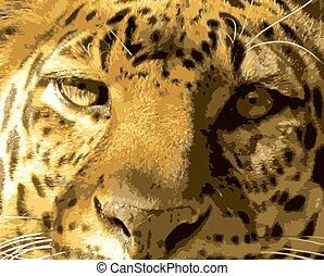 primo piano, leopardo, faccia, vista frontale, vettore