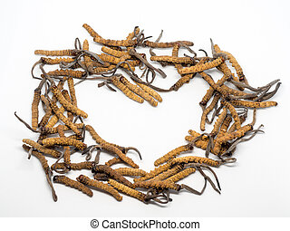primo piano, ophiocordyceps, sinensis, (chong, cao, dong, chong, xia, cao), o, fungo, cordyceps, questo, è, uno, herbs., medicinale, proprietà, in, il, trattamento, di, diseases.