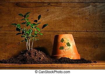 primo piano, pianta, vaso, giovane