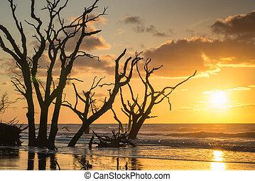 primo piano, sopra, albero, oceano, spiaggia, alba