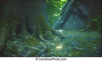 primordial, forêt, mossed, terrestre