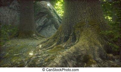 primordial, forêt, terrestre, mossed