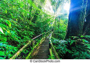 primordial, lumière soleil, forêt,  passage