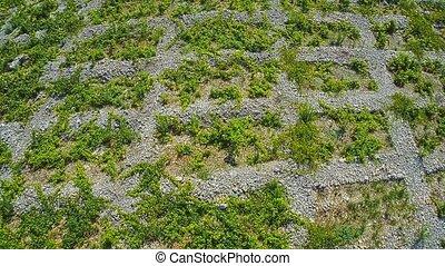 Primosten Vineyards, aerial shot - Aerial view of old...