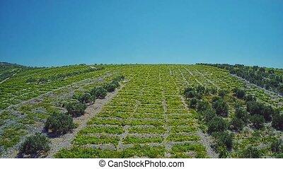 Primosten Vineyards, UNESCO World Heritage site - Aerial...