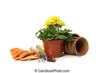 Primrose and gardening tools isolated on white background