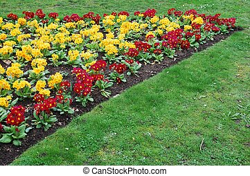 Primrose flowers - beautiful orange and red primrose flowers...