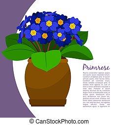 Primrose indoor plant in pot banner template, vector illustration