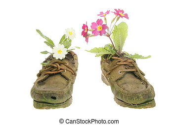 Primrose plants in shoes