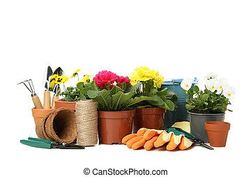 Primroses, pansies and gardening tools isolated on white background