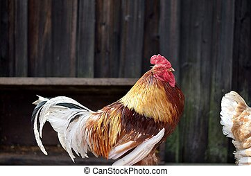 principal  - Birds on the farm