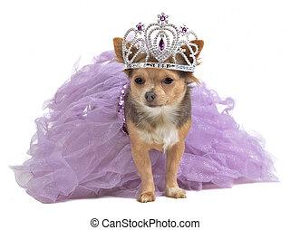 principessa, cane, con, diadema, e, vestire