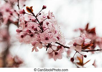 printemps, amande, fleurs, branche arbre