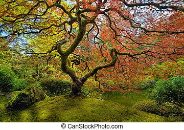printemps, arbre, érable, japonaise