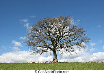 printemps, arbre chêne