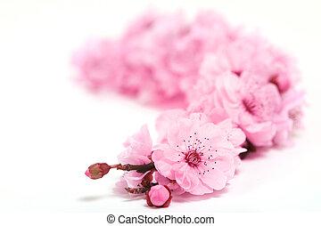 printemps, arbre, champ, profondeur, fleurs, cerise, extrême