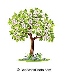 printemps, arbre, contre, illustration, fond, blanc