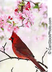 printemps, arbre, fleurs, parmi, cardinal