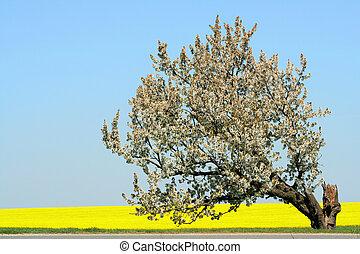 printemps, arbre, pomme, temps