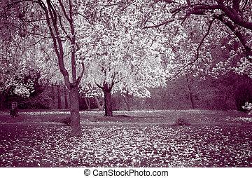 printemps, arbres