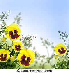 printemps, arrière-plan vert, jaune, violettes