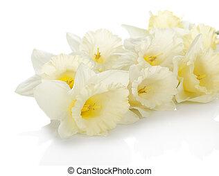 printemps, blanc, fleurs, doux