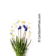 Printemps, blanc, fleurs, fond, vendange