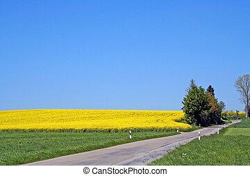printemps, blueyellow