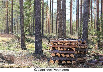 printemps, bois brûler, forêt