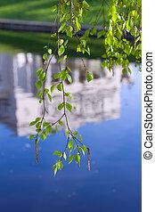 printemps, branches, bouleau