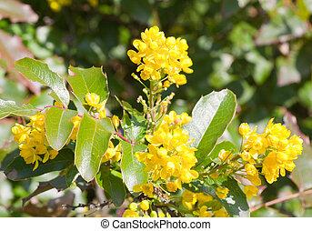 buisson fleurs jaune photo flowers studio buisson photo de stock rechercher images. Black Bedroom Furniture Sets. Home Design Ideas