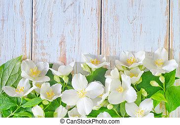 printemps, cadre, jasmin, fond, fleurs blanches