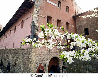 printemps, château, arbre, beau, image, closeup, vieux, floraison, cerise, jour ensoleillé, branche