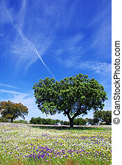 printemps, chêne, arbres, portugal