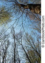 printemps, ciel, arbres