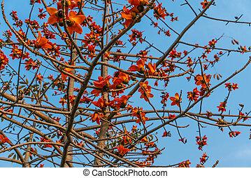 printemps, ciel bleu, fleurs, fond